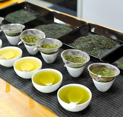 高山茶│高山茶葉│高山茶葉種類介紹